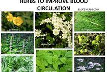 Herbs spices more the just 4 FOODS / by Maria Van Balen//jones