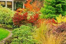 Gardening / by Janice Shelton