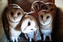 Owls  / by Alana Silvea