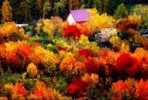 Awesome Autumn / by Alana Silvea