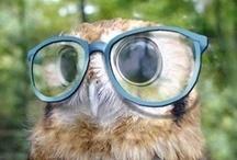 Owls / Whoooo?  / by Jennifer Cisney