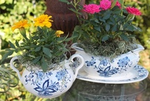 Garden Beauty / by Andrea Haywood at Opulent Cottage