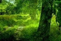 Forests / by Katelyn Christensen