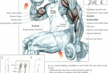 Bicep Exercises / by CTD Sports