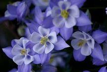 Flowers, flowers, flowers / by Tara Cronin