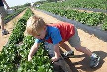 Sweet Berry Farm | The Highland Lakes TX / In the beautiful Texas #Hill #Country, Sweet Berry Farm, LLC - Pick Your Own Berries in Spring and Pumpkin Patch in Fall      Come make 'Sweet' memories with us in #Marble #Falls, Tx    / by The Highland Lakes of Texas, A Beautiful Destination