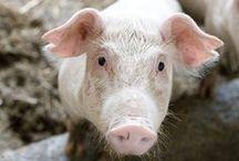 Animals / by Heifer International