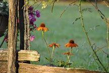 Gardening / by Becky Hepworth Angood