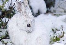 bunnylove / by Jennifer