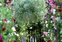 Garden / by Nataly Tursunbayeva