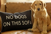 ❤️ dogs | | puppies ❤️ / Dog spelled backward is God; just saying...  / by ღJo AnneD•♥•✿⊱╮