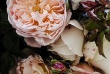 wedding nuances / by Cindy Ollig