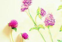 Botanical expedition / by Leidi Jorge