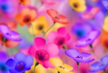 Colorful / by Donna Miller