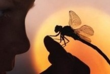 Dragonflies / by Donna Miller