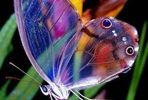 Butterflies / by Donna Miller