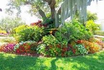 Gardens / by Vicki Patton
