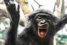 Funny / by Cincinnati Zoo