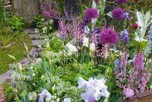 Garden / by Olivia Howe Gillespie