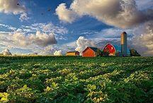 Farmhouse Living / Everything Country  / by Alicia Calhoun-Mackes