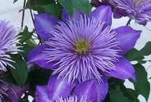 Garden Magic - Plant Profiles / by Sarah Jenkins