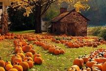Autumn's Splendor / by J A N E T * S L A B O S Z - G R I G G S