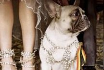 Swarovski / by Borsheims Fine Jewelry and Gifts