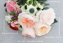 Flowers / by Erin Freedman
