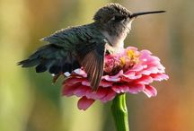 hummingbirds..and more / by Victoria Meisner