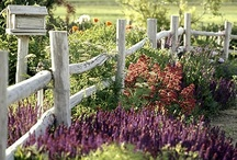 Gardening & Landscaping / by Amy Murphy