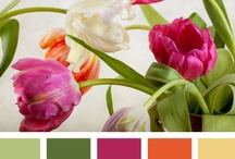Color palette ideas / by magenta