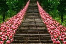 Staircases and Pathways / by Caty Miller