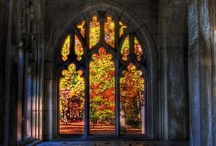Stained Glass / by Barb Miller