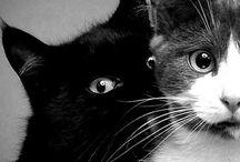 I like cats / by Hannah Turner