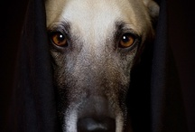 the soul of a dog... / A special dog entered my life and changed me forever. / by Lisa Carol