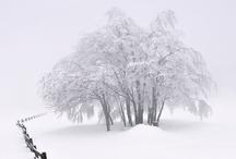 Under Winter's Sky / by Lisa Carol