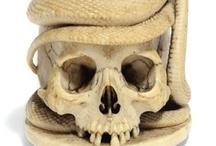 Skull Curiosity / by Lisa Carol