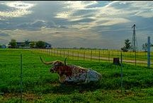 Your Texas - Show us what you love! / Share your favorite photos from across the beautiful State of Texas - show us why you love Texas!  We'd love to have you pin to our board - just email us so we can add you - texasbrazostrail@gmail.com / by TX Brazos Trail