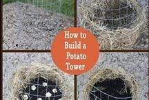 Gardening / Gardening ideas plus updates from my own garden. / by Jackie