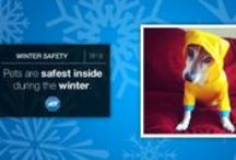 Winter Safety Tips / #StaySafe this #Winter by following our tips, whether it's snowing, hailing, or storming. / by ADT