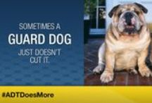 ADT Does More / You may think you are protected by your guard dog but sometimes a guard dog just doesn't cut it. For the animals that are loving, sweet, and more playful than ferocious, #ADTDoesMore to protect what matters most. / by ADT