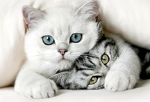 Cute Kittens, Cats and Puppies. / by Iridonousa