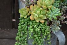 Gardening Ideas / by Mollie Manley