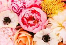 Flowers + Plants / by Sarah Champion