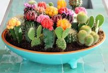 Green Thumb / Cool gardening projects to try.  / by Liz Gray
