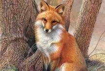 Fox! / by Holly Fox