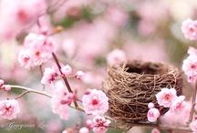 ~Spring~ / by Jennifer Grogean