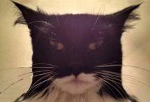 Animals - Batcat / Feline casting of Batman / by David James