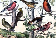 Bird clip art / by Red Hen Home
