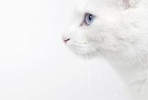 ❤ cats / by Vert et Foncé △